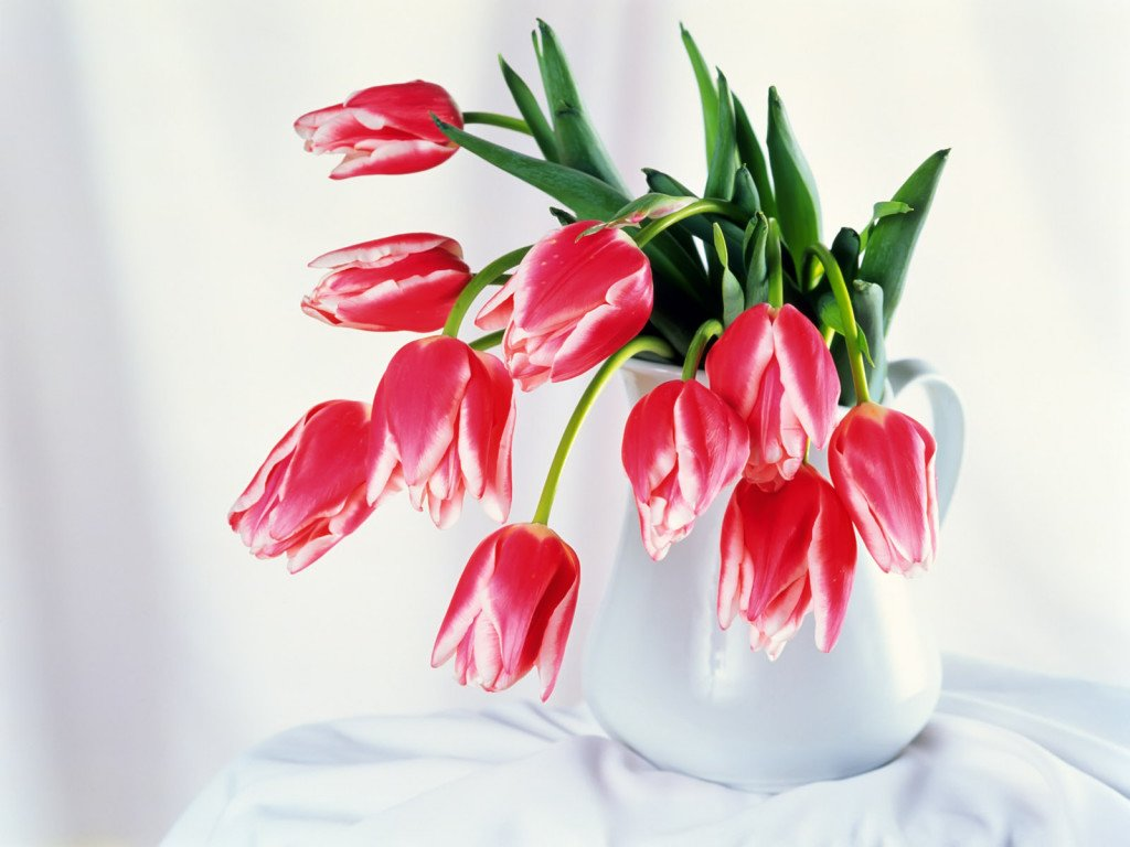 Цветы Nature Flowers Tulips bowls Flowers 008358 картинка